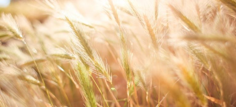 В Украине выросли расходы на производство сельскохозяйственной продукции