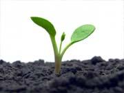 На аграрный сектор приходится 7% кредитов банков Украины